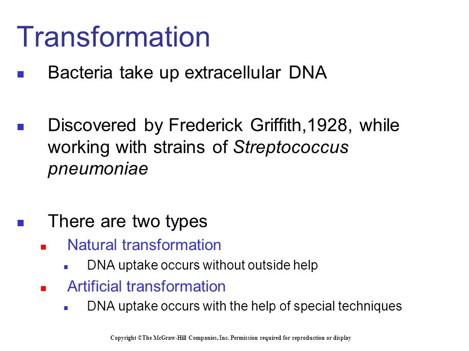 Bacteria take up extracellular DNA Discovered by Frederick Griffith,1928, while working with strains of Streptococcus pneumoniae There are two types Natural transformation DNA uptake occurs without outside help Artificial transformation DNA uptake occurs with the help of special techniques Copyright ©The McGraw-Hill Companies, Inc.