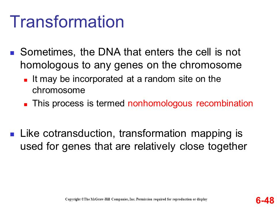 Sometimes, the DNA that enters the cell is not homologous to any genes on the chromosome It may be incorporated at a random site on the chromosome This process is termed nonhomologous recombination Like cotransduction, transformation mapping is used for genes that are relatively close together Copyright ©The McGraw-Hill Companies, Inc.