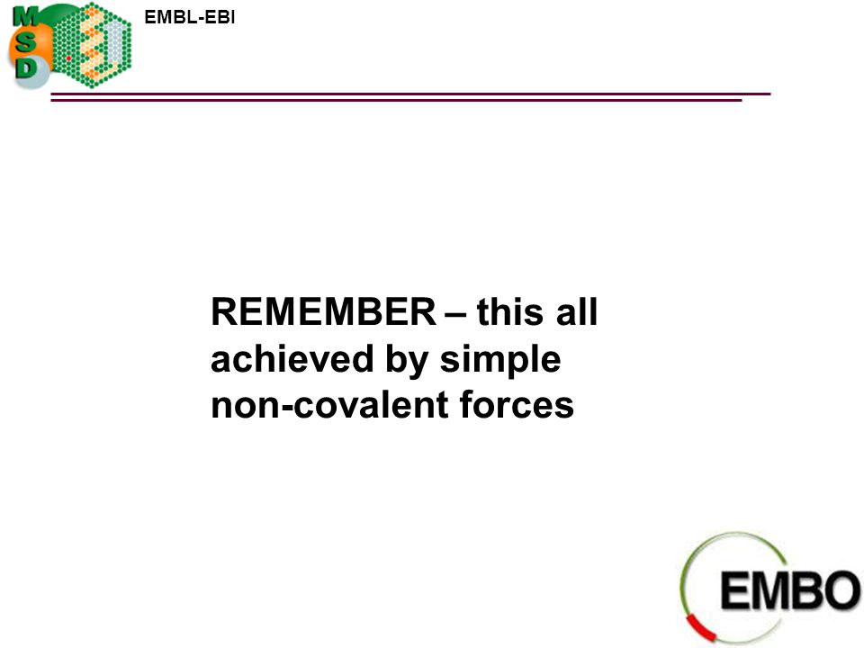 EMBL-EBI REMEMBER – this all achieved by simple non-covalent forces