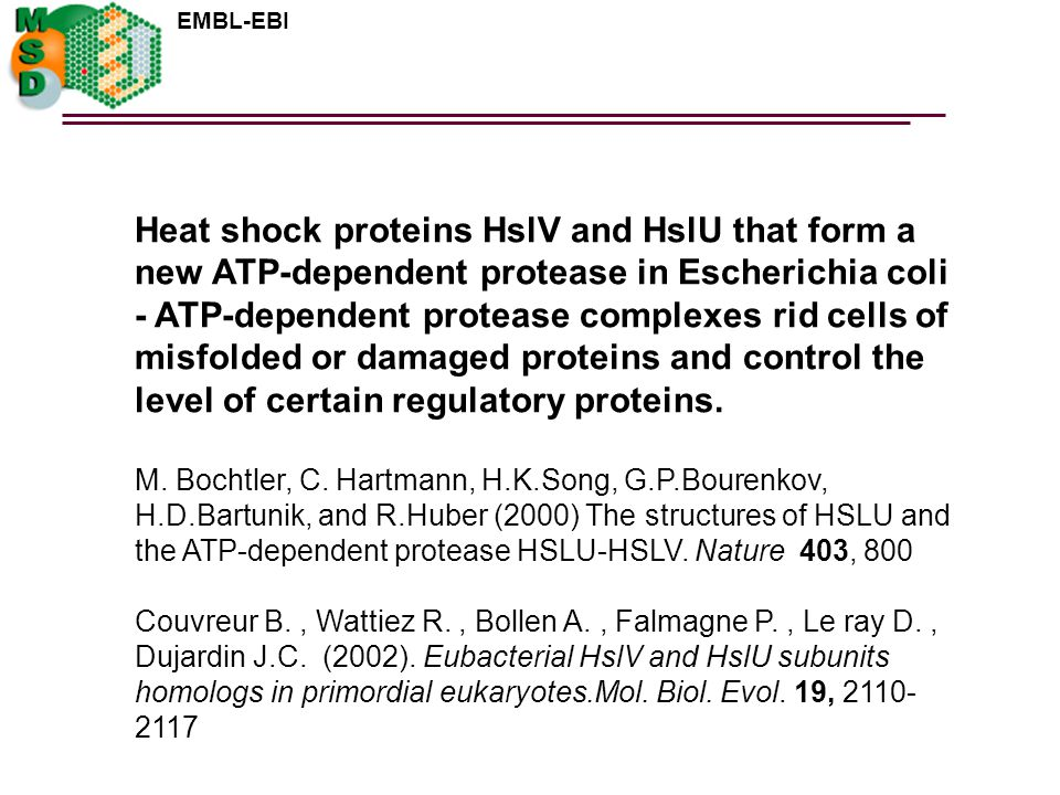 EMBL-EBI Heat shock proteins HslV and HslU that form a new ATP-dependent protease in Escherichia coli - ATP-dependent protease complexes rid cells of