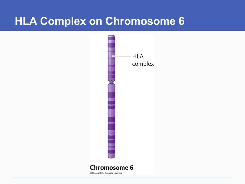 HLA Complex on Chromosome 6