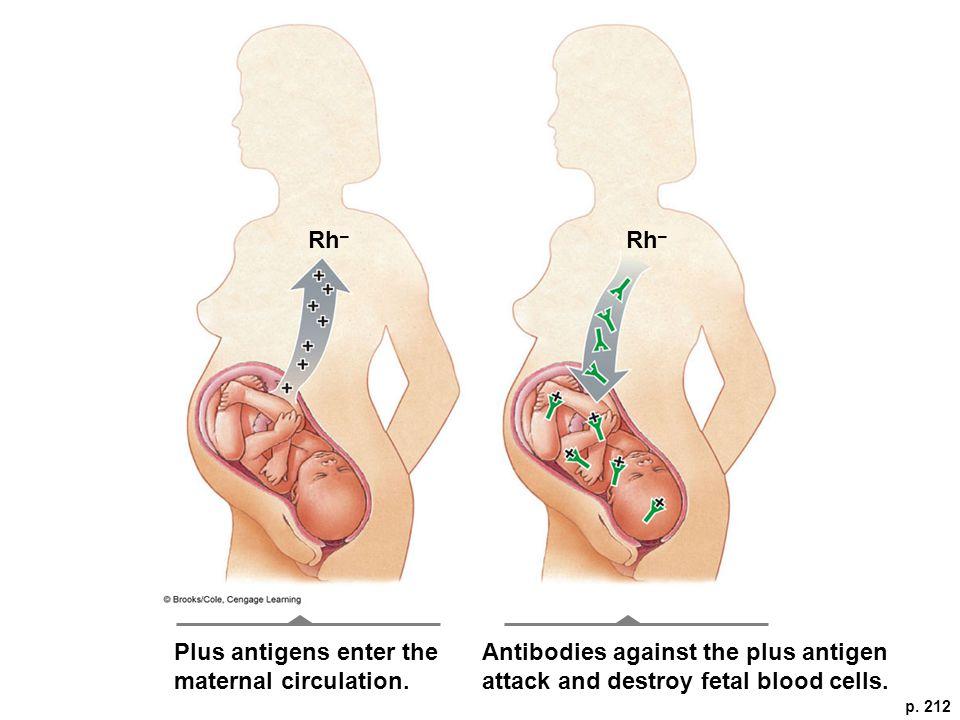p. 212 Rh – Plus antigens enter the maternal circulation.