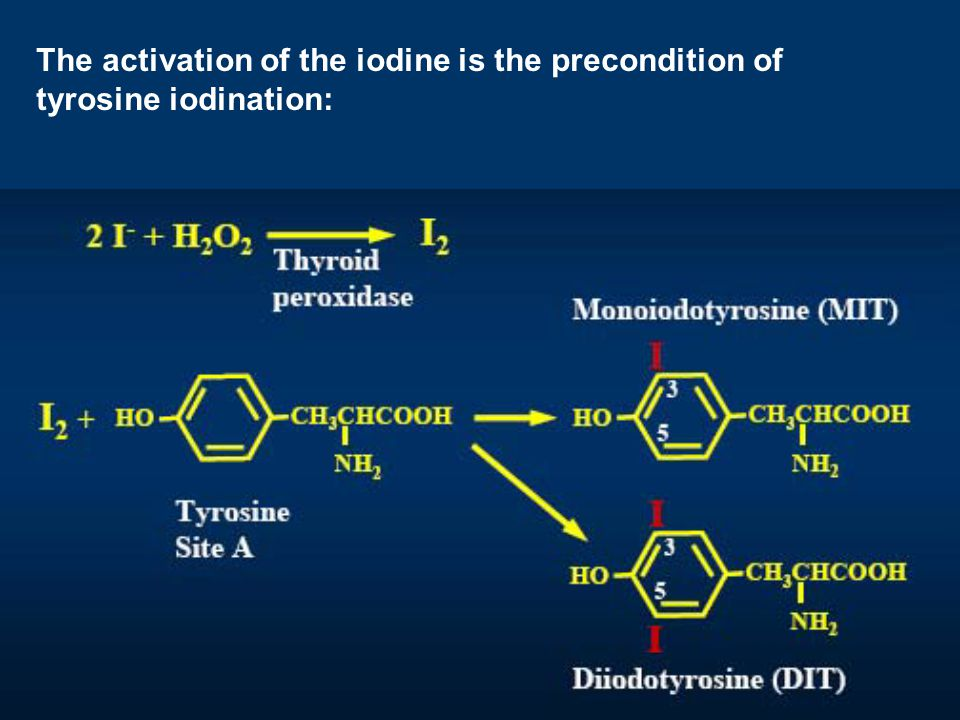 The activation of the iodine is the precondition of tyrosine iodination: