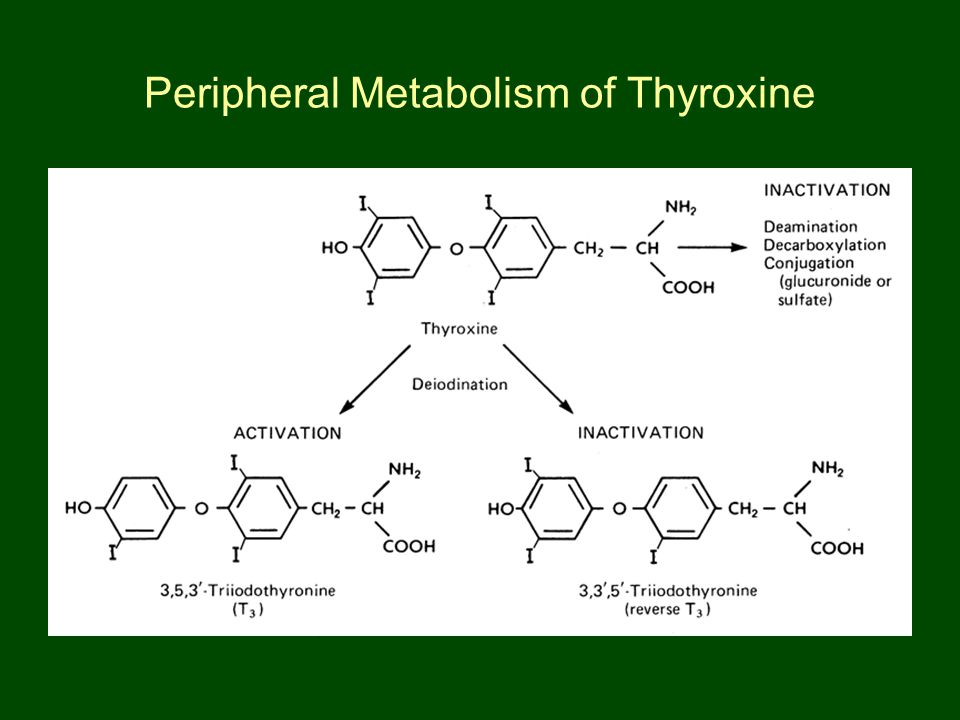 Peripheral Metabolism of Thyroxine