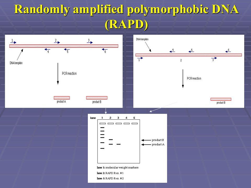 Randomly amplified polymorphobic DNA (RAPD)