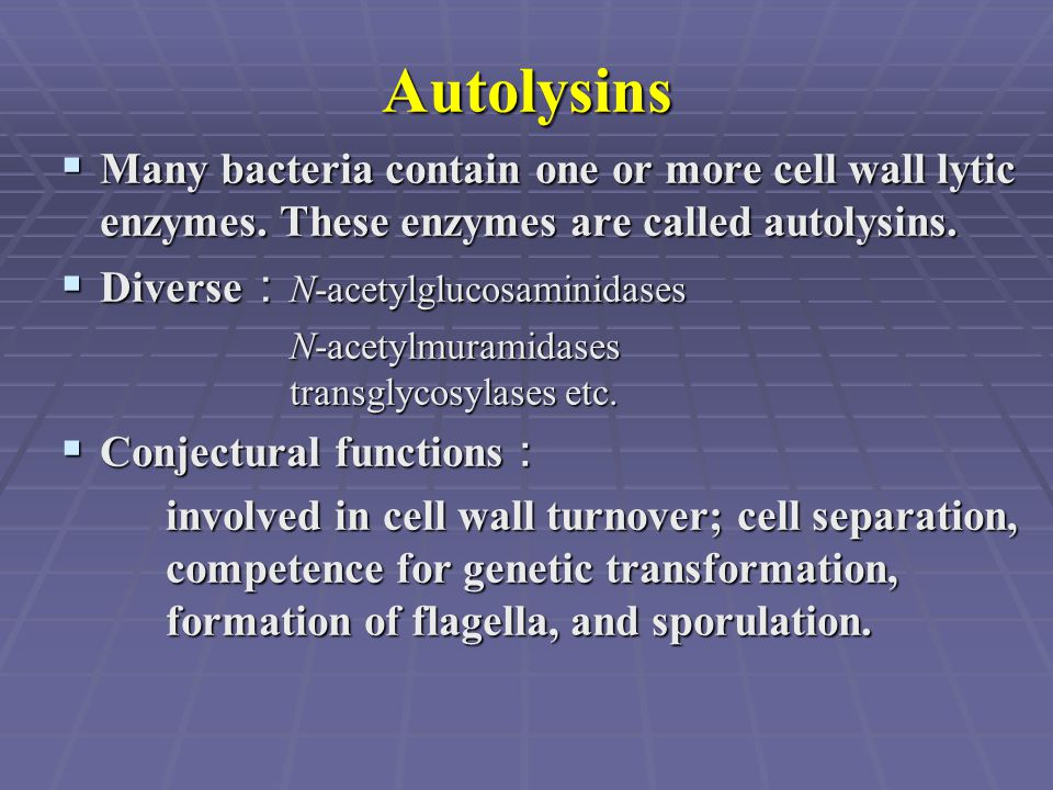 Autolysins  Many bacteria contain one or more cell wall lytic enzymes. These enzymes are called autolysins.  Diverse : N-acetylglucosaminidases N-ac