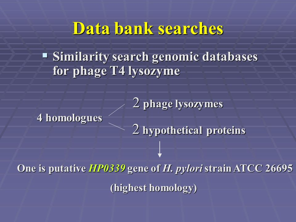 Data bank searches  Similarity search genomic databases for phage T4 lysozyme 2 phage lysozymes 2 hypothetical proteins 2 hypothetical proteins 4 hom