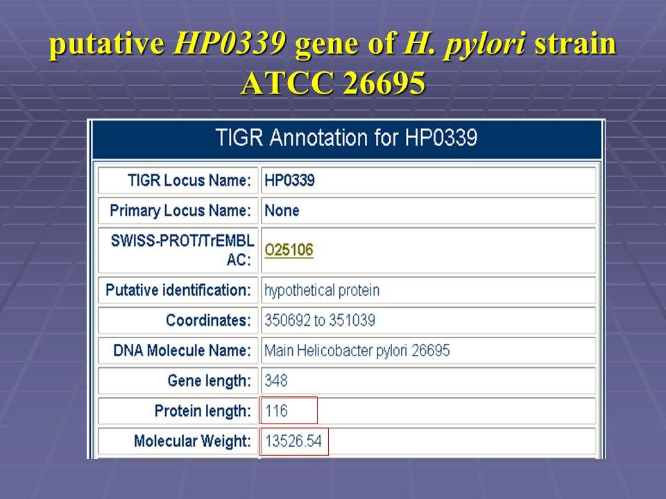 putative HP0339 gene of H. pylori strain ATCC 26695