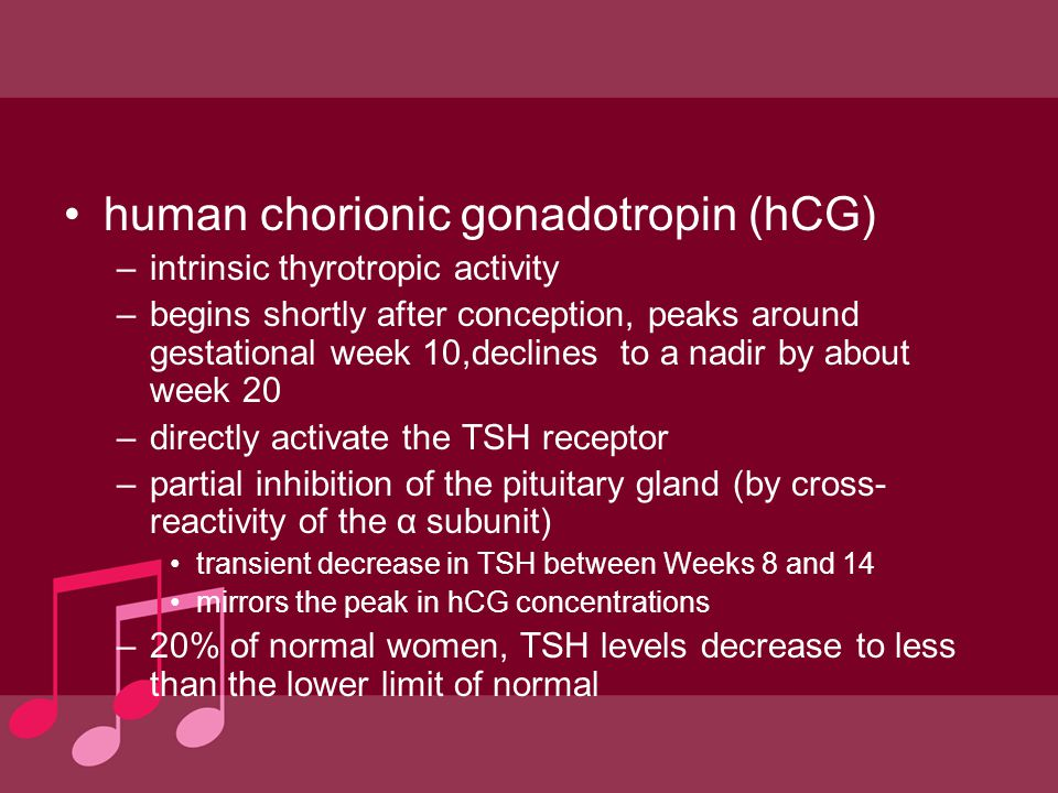 human chorionic gonadotropin (hCG) –intrinsic thyrotropic activity –begins shortly after conception, peaks around gestational week 10,declines to a na