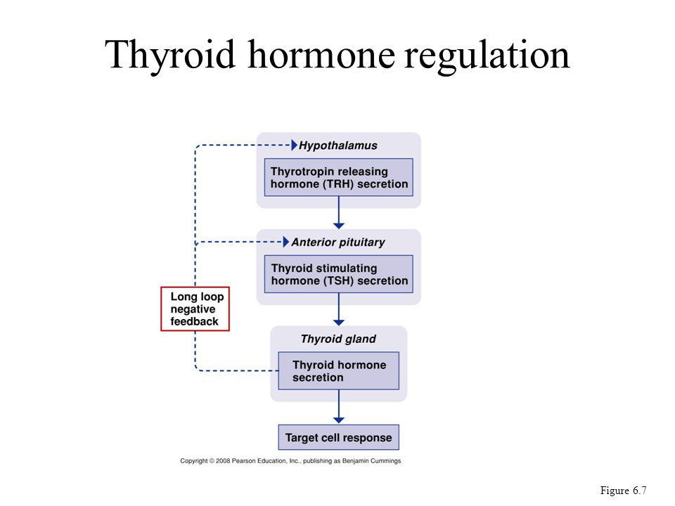 Figure 6.7 Thyroid hormone regulation