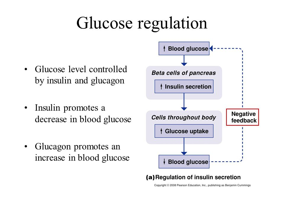 Glucose regulation Glucose level controlled by insulin and glucagon Insulin promotes a decrease in blood glucose Glucagon promotes an increase in blood glucose