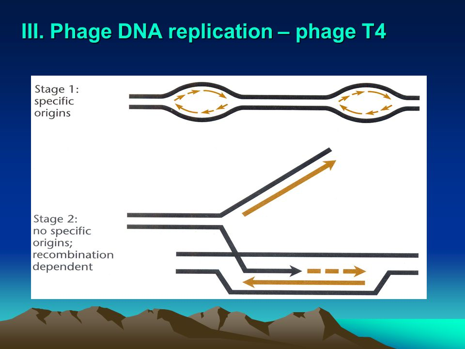 A short segment of the DNA molecule 1.
