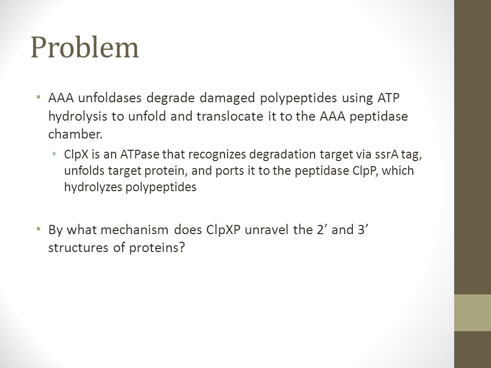 Problem AAA unfoldases degrade damaged polypeptides using ATP hydrolysis to unfold and translocate it to the AAA peptidase chamber.