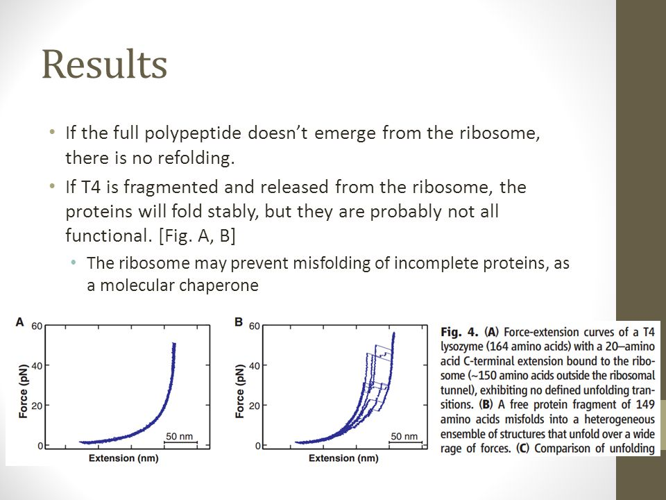 Conclusions What is the function of the ribosome with respect to protein transitions from nascent to native state.