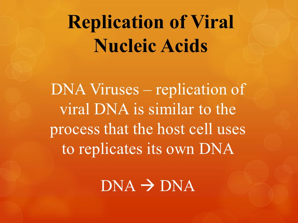 Replication of Viral Nucleic Acids DNA Viruses – replication of viral DNA is similar to the process that the host cell uses to replicates its own DNA DNA  DNA