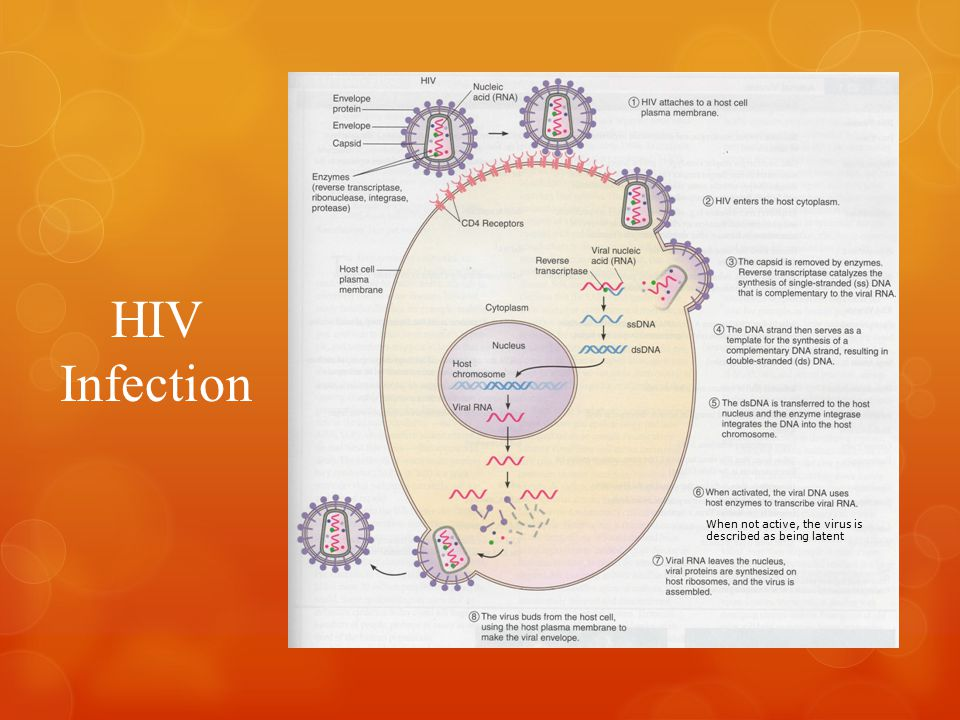 HIV Infection When not active, the virus is described as being latent
