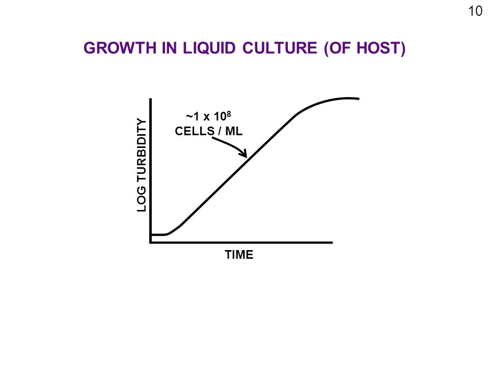 10 GROWTH IN LIQUID CULTURE (OF HOST) TIME LOG TURBIDITY ~1 x 10 8 CELLS / ML