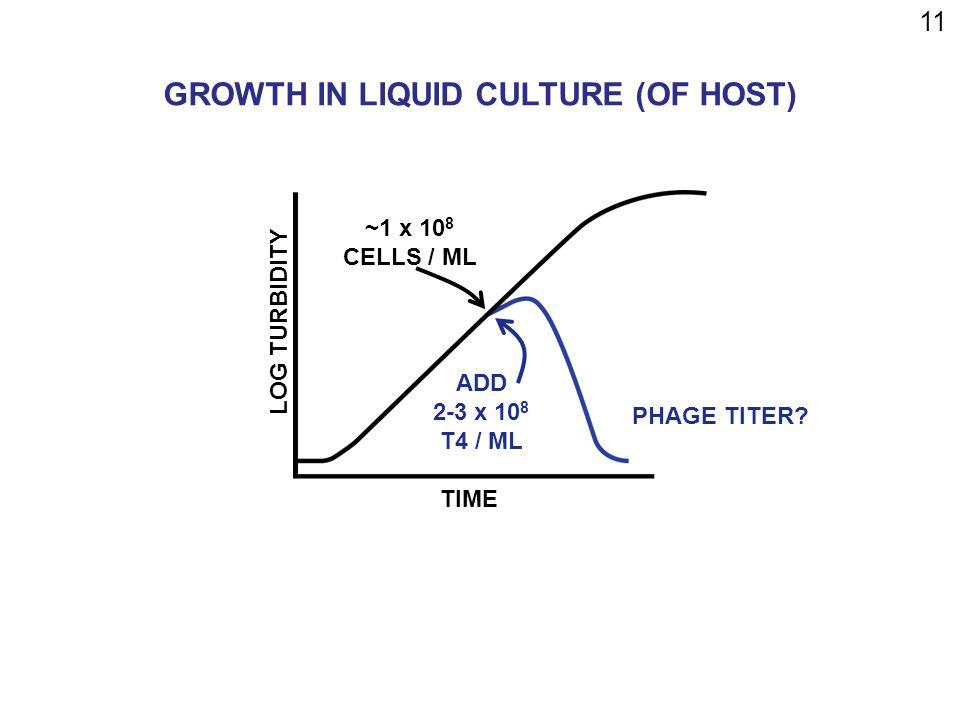 11 TIME LOG TURBIDITY ~1 x 10 8 CELLS / ML ADD 2-3 x 10 8 T4 / ML PHAGE TITER.