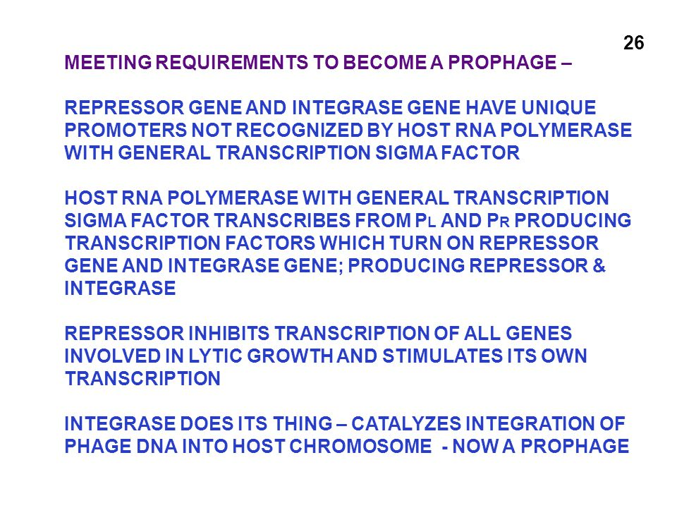 MEETING REQUIREMENTS TO BECOME A PROPHAGE – REPRESSOR GENE AND INTEGRASE GENE HAVE UNIQUE PROMOTERS NOT RECOGNIZED BY HOST RNA POLYMERASE WITH GENERAL TRANSCRIPTION SIGMA FACTOR HOST RNA POLYMERASE WITH GENERAL TRANSCRIPTION SIGMA FACTOR TRANSCRIBES FROM P L AND P R PRODUCING TRANSCRIPTION FACTORS WHICH TURN ON REPRESSOR GENE AND INTEGRASE GENE; PRODUCING REPRESSOR & INTEGRASE REPRESSOR INHIBITS TRANSCRIPTION OF ALL GENES INVOLVED IN LYTIC GROWTH AND STIMULATES ITS OWN TRANSCRIPTION INTEGRASE DOES ITS THING – CATALYZES INTEGRATION OF PHAGE DNA INTO HOST CHROMOSOME - NOW A PROPHAGE 26