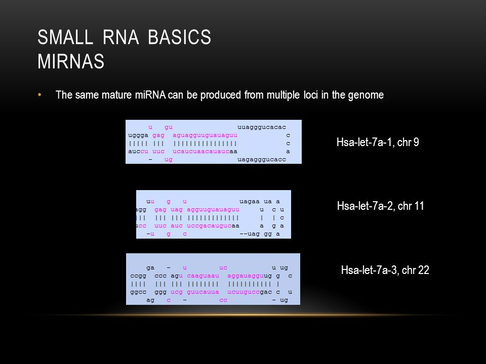 SMALL RNA BASICS MIRNAS Sequence Isoforms (Length, Position(start, end))