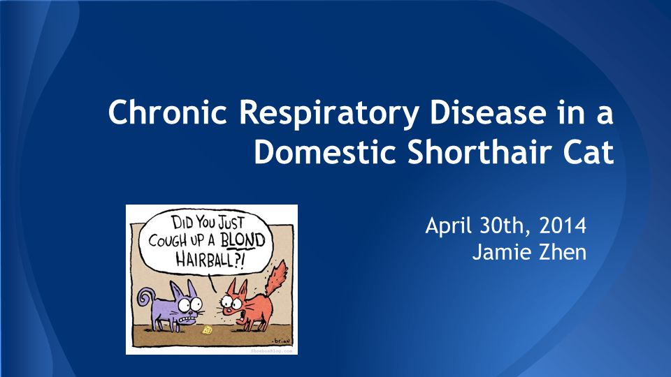 Chronic Respiratory Disease in a Domestic Shorthair Cat April 30th, 2014 Jamie Zhen