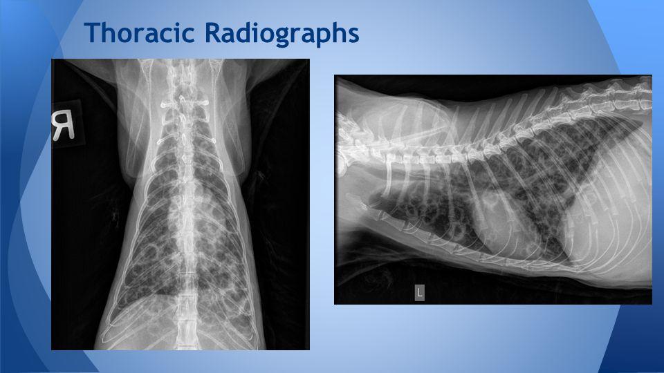 Thoracic Radiographs