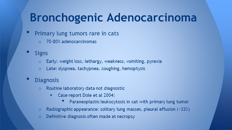 Primary lung tumors rare in cats o 70-80% adenocarcinomas Signs o Early: weight loss, lethargy, weakness, vomiting, pyrexia o Late: dyspnea, tachypnea, coughing, hemoptysis Diagnosis o Routine laboratory data not diagnostic  Case report Dole et al 2004: Paraneoplastic leukocytosis in cat with primary lung tumor o Radiographic appearance: solitary lung masses, pleural effusion (~33%) o Definitive diagnosis often made at necropsy Bronchogenic Adenocarcinoma