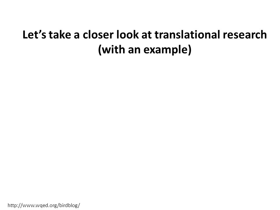 Let's take a closer look at translational research (with an example) http://www.wqed.org/birdblog/