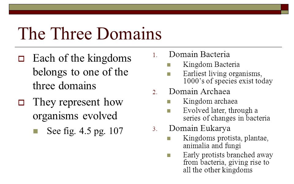 The Three Domains  Each of the kingdoms belongs to one of the three domains  They represent how organisms evolved See fig. 4.5 pg. 107 1. Domain Bac