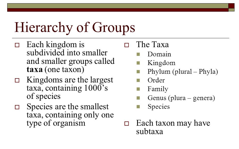 Hierarchy of Groups  Each kingdom is subdivided into smaller and smaller groups called taxa (one taxon)  Kingdoms are the largest taxa, containing 1