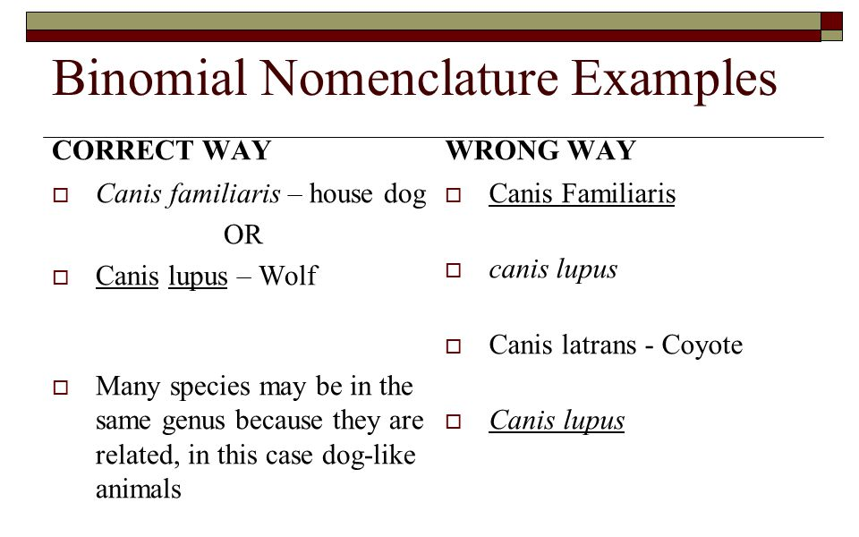 Binomial Nomenclature Examples CORRECT WAY  Canis familiaris – house dog OR  Canis lupus – Wolf  Many species may be in the same genus because they