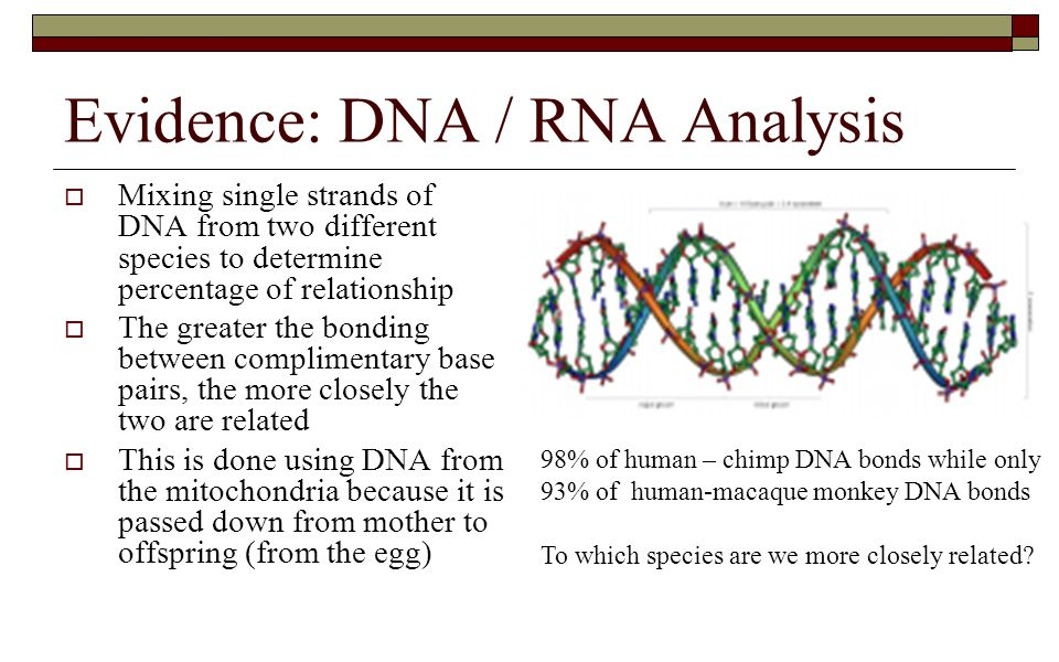 Evidence: DNA / RNA Analysis  Mixing single strands of DNA from two different species to determine percentage of relationship  The greater the bondi