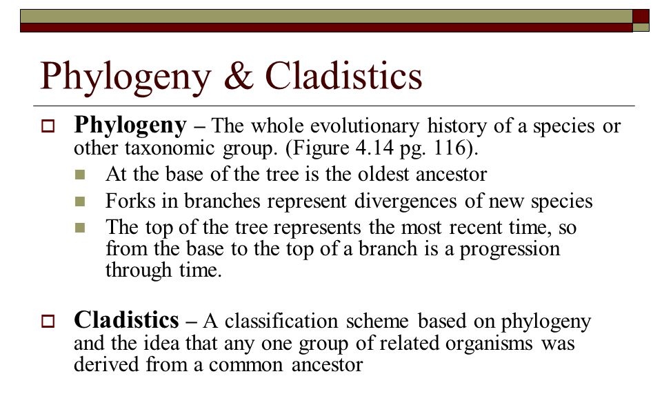Phylogeny & Cladistics  Phylogeny – The whole evolutionary history of a species or other taxonomic group. (Figure 4.14 pg. 116). At the base of the t