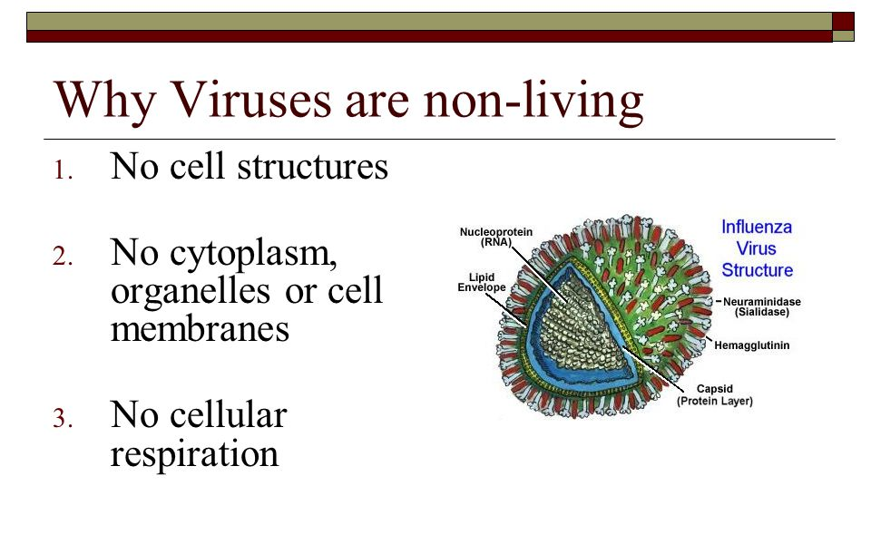 Why Viruses are non-living 1.No cell structures 2.