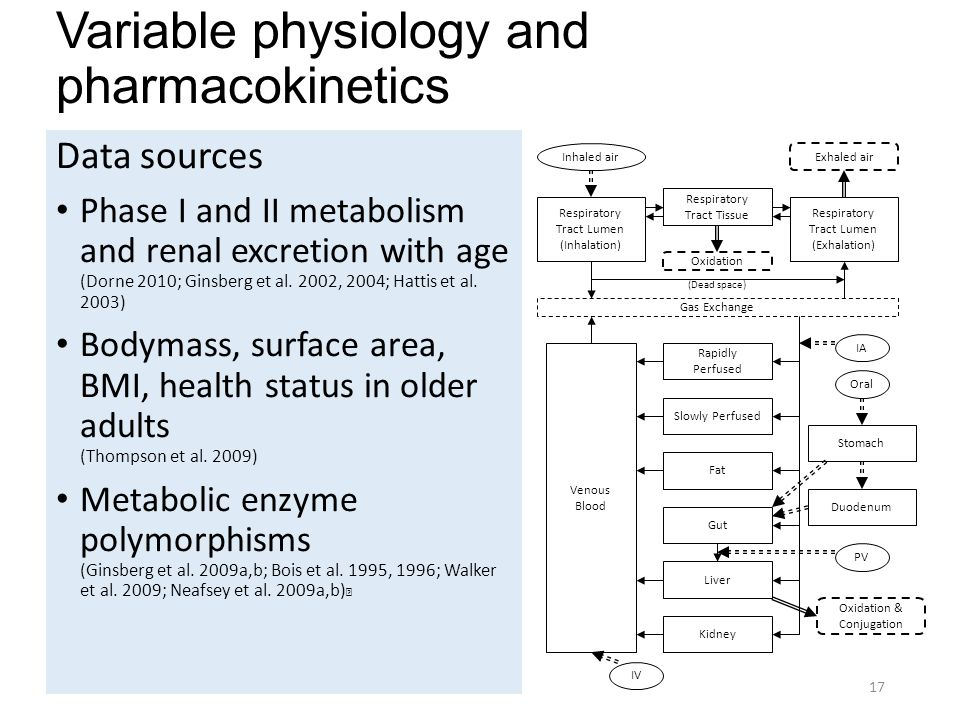 Variable physiology and pharmacokinetics Data sources Phase I and II metabolism and renal excretion with age (Dorne 2010; Ginsberg et al.