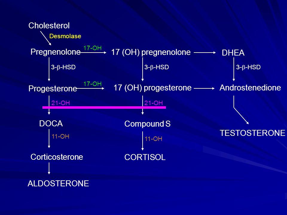Cholesterol Pregnenolone Progesterone DOCA Corticosterone ALDOSTERONE 17 (OH) pregnenolone DHEA 17 (OH) progesteroneAndrostenedione Compound S CORTISO