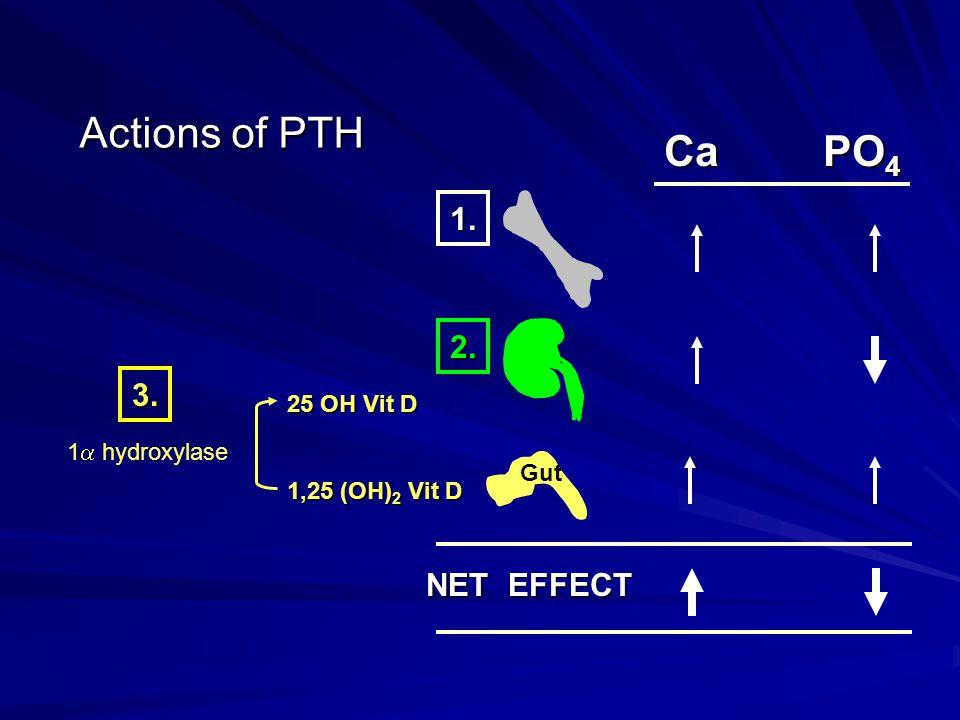 Actions of PTH 1. 2. CaPO 4 NET EFFECT 25 OH Vit D 1,25 (OH) 2 Vit D 1  hydroxylase 3. Gut