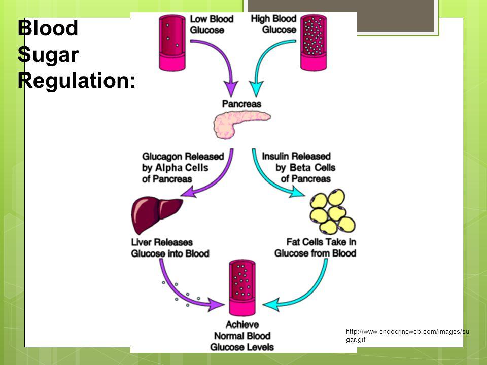 http://www.endocrineweb.com/images/su gar.gif Blood Sugar Regulation: