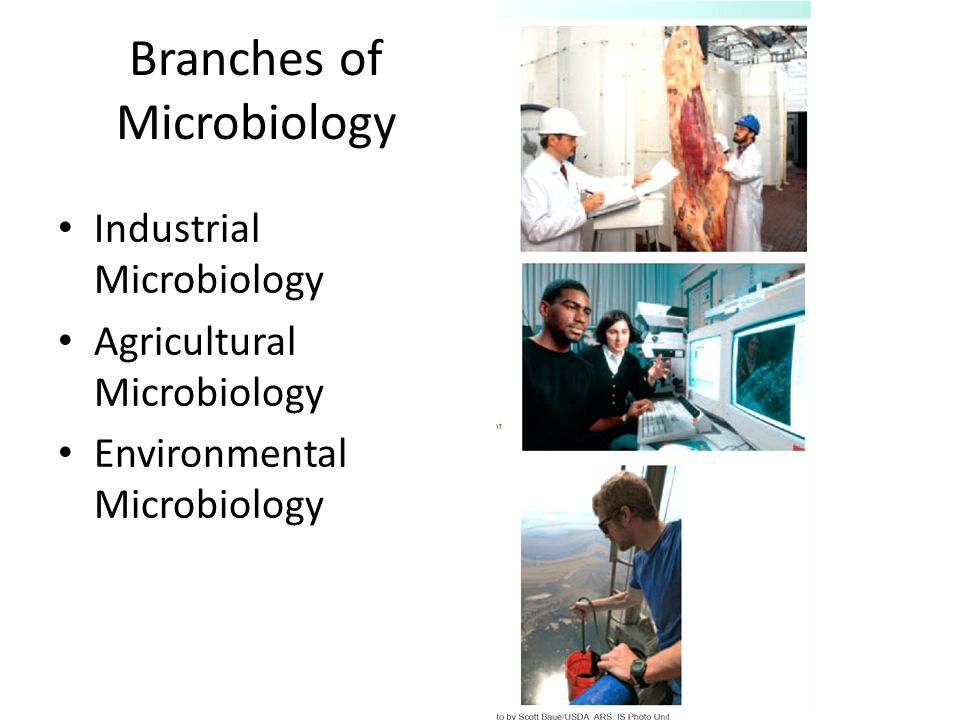 Branches of Microbiology Industrial Microbiology Agricultural Microbiology Environmental Microbiology