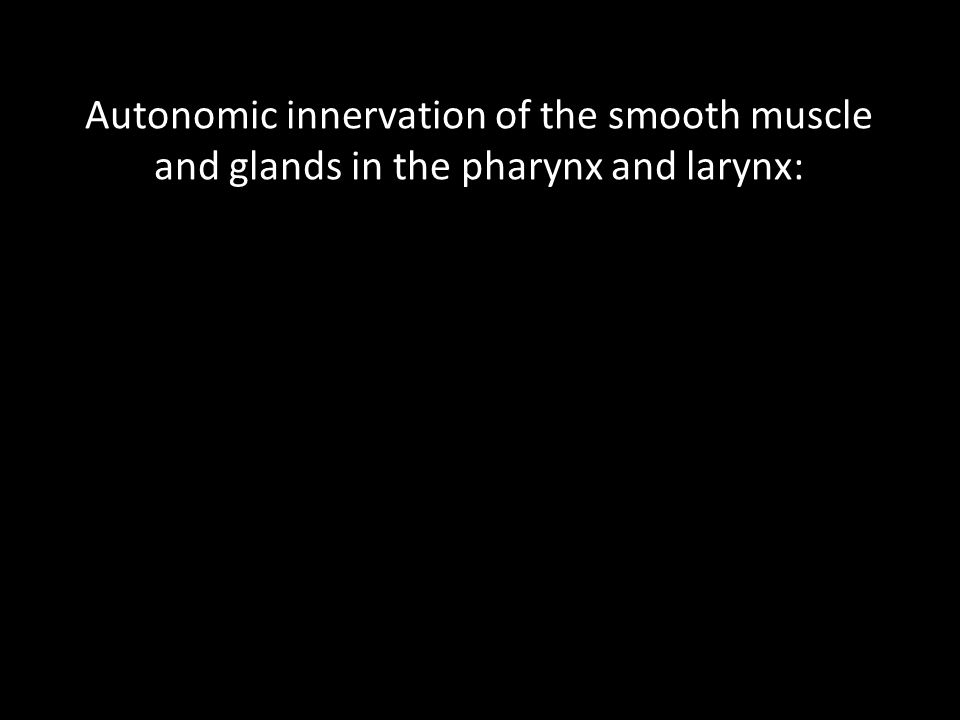 Autonomic innervation of the smooth muscle and glands in the pharynx and larynx: