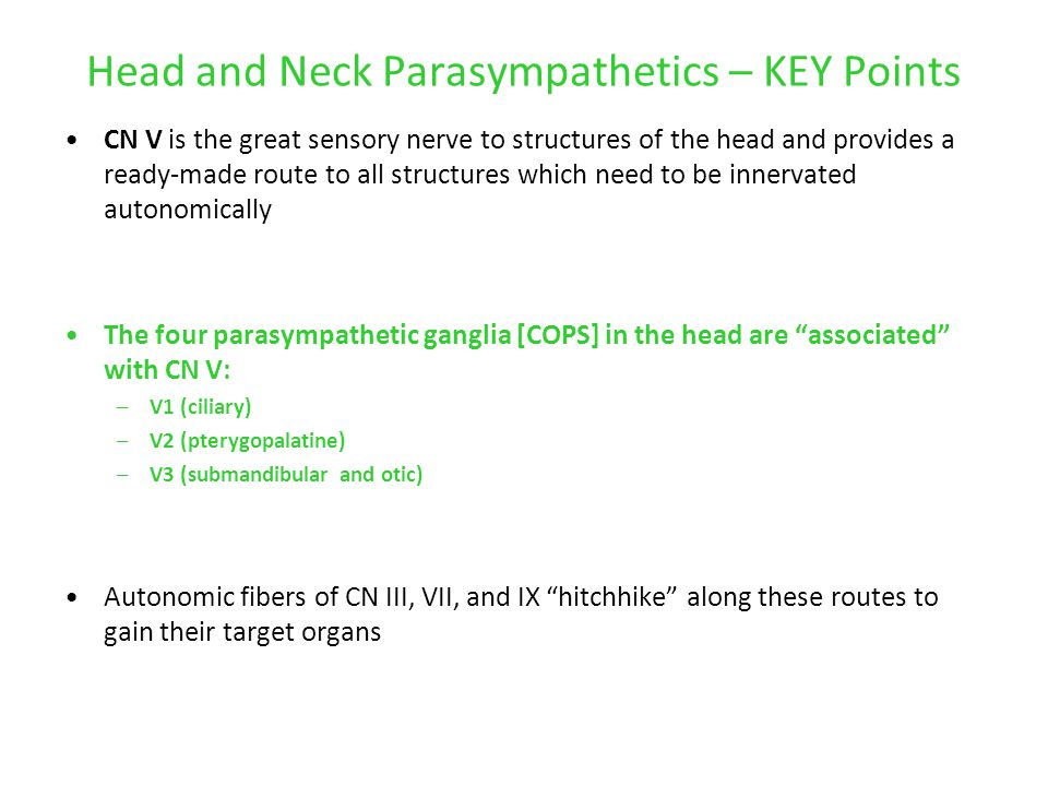 Head and Neck Parasympathetics – KEY Points CN V is the great sensory nerve to structures of the head and provides a ready-made route to all structure