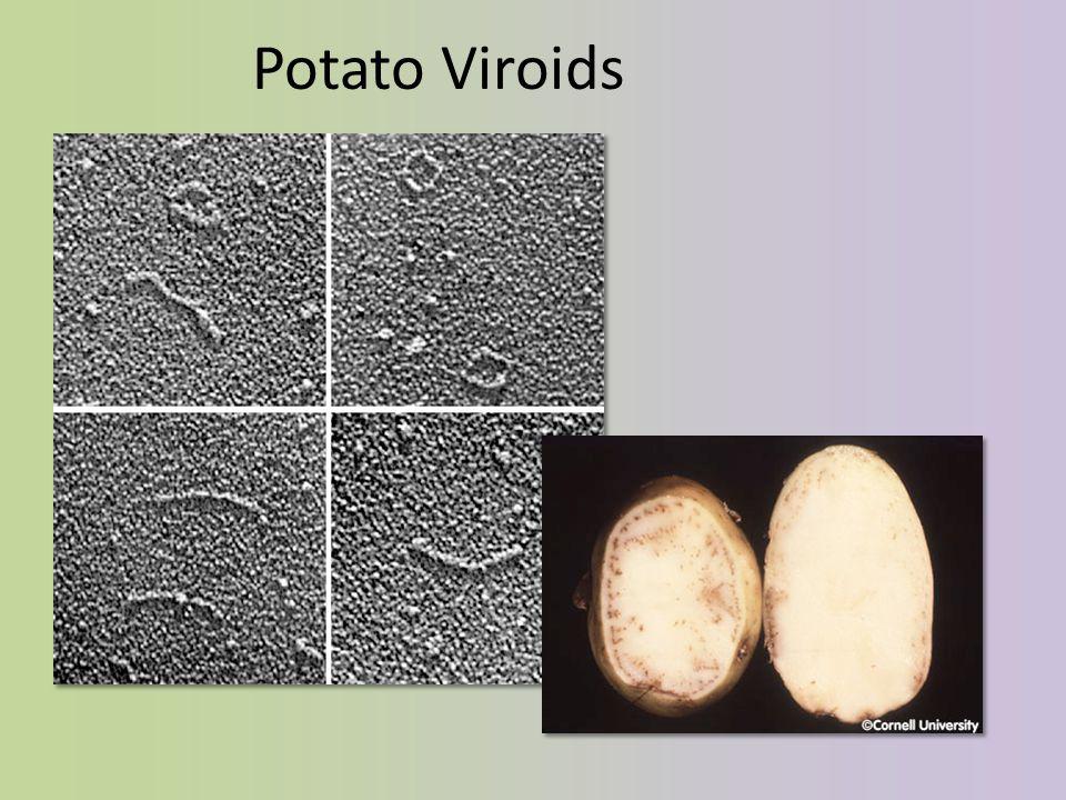Potato Viroids
