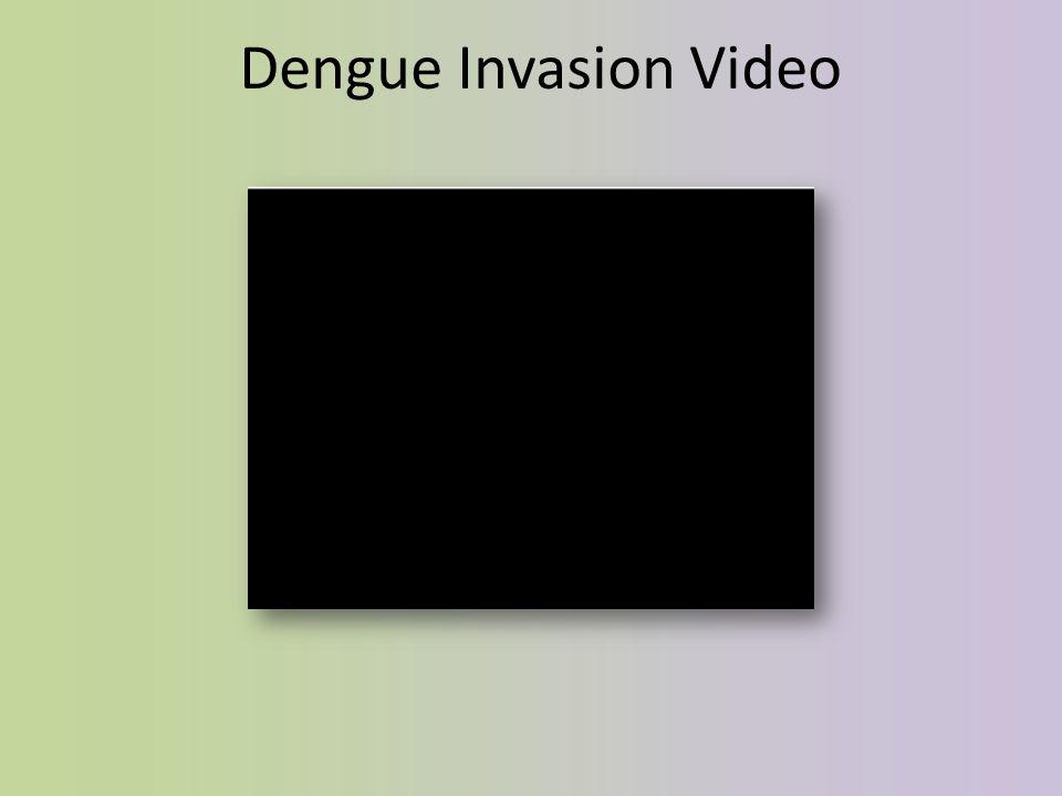 Dengue Invasion Video