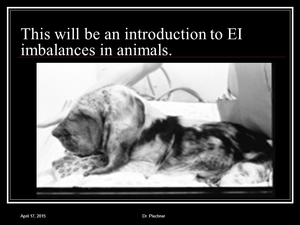 April 17, 2015Dr. Plechner This will be an introduction to EI imbalances in animals.