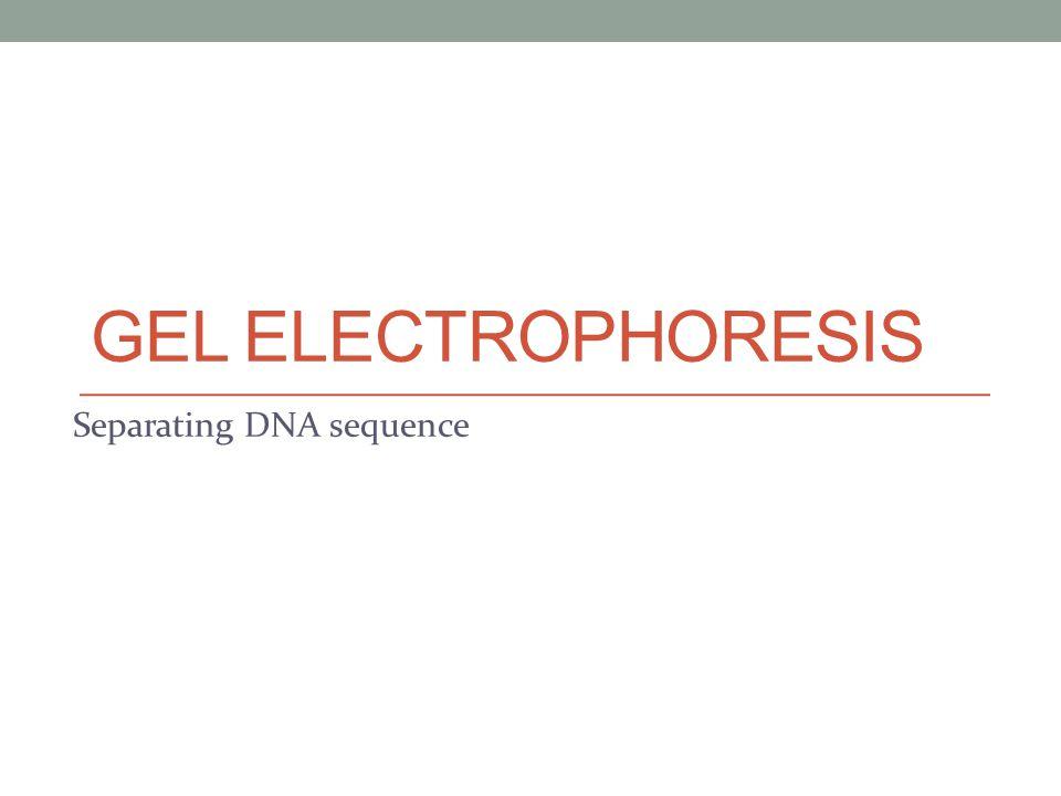 GEL ELECTROPHORESIS Separating DNA sequence
