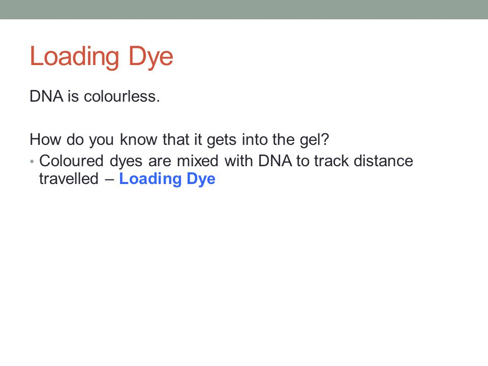 Loading Dye DNA is colourless. How do you know that it gets into the gel? Coloured dyes are mixed with DNA to track distance travelled – Loading Dye