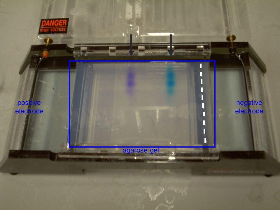 negative electrode positive electrode agarose gel