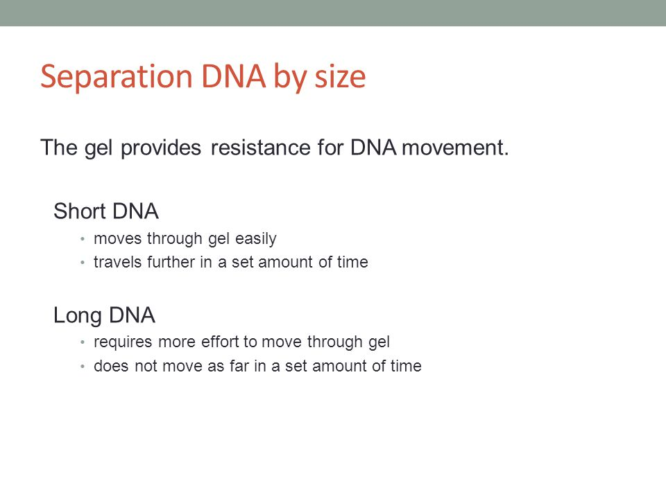 Separation DNA by size The gel provides resistance for DNA movement.