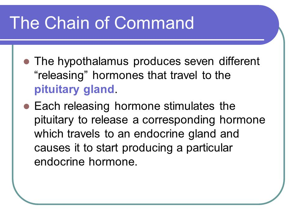 "The Chain of Command The hypothalamus produces seven different ""releasing"" hormones that travel to the pituitary gland. Each releasing hormone stimula"