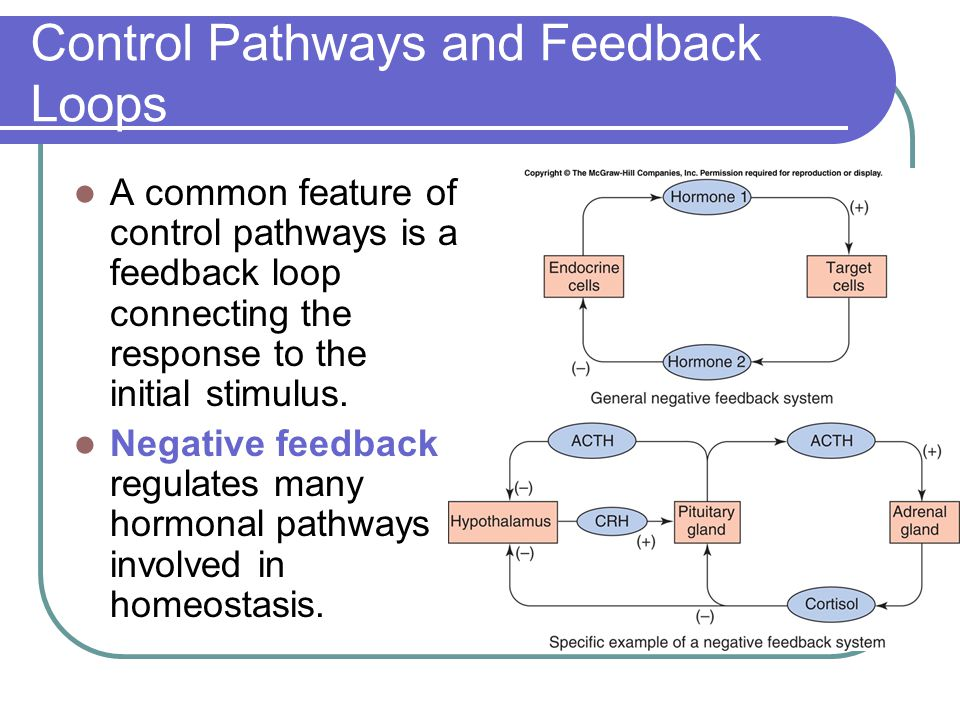 Control Pathways and Feedback Loops A common feature of control pathways is a feedback loop connecting the response to the initial stimulus. Negative